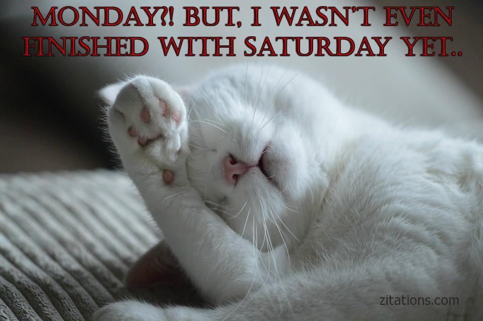 Funny monday morning quotes to cure the monday blues zitations funny monday morning quotes 1 voltagebd Choice Image