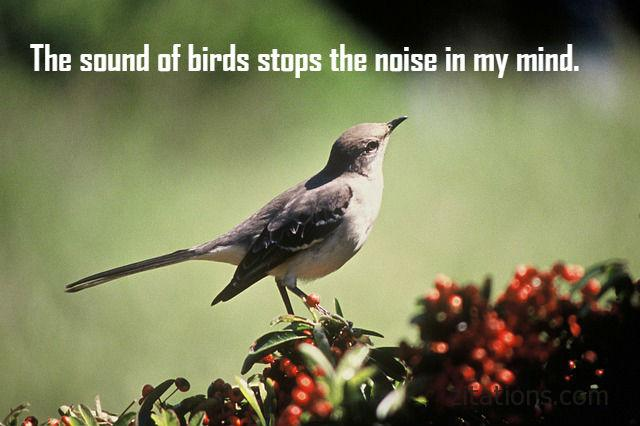 Birds Quotes Classy Quotes About Birds  Inspirational Picture Messages  Zitations